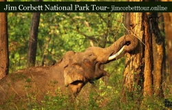Jim corbett tour services.