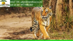 Corbett tour packages services.